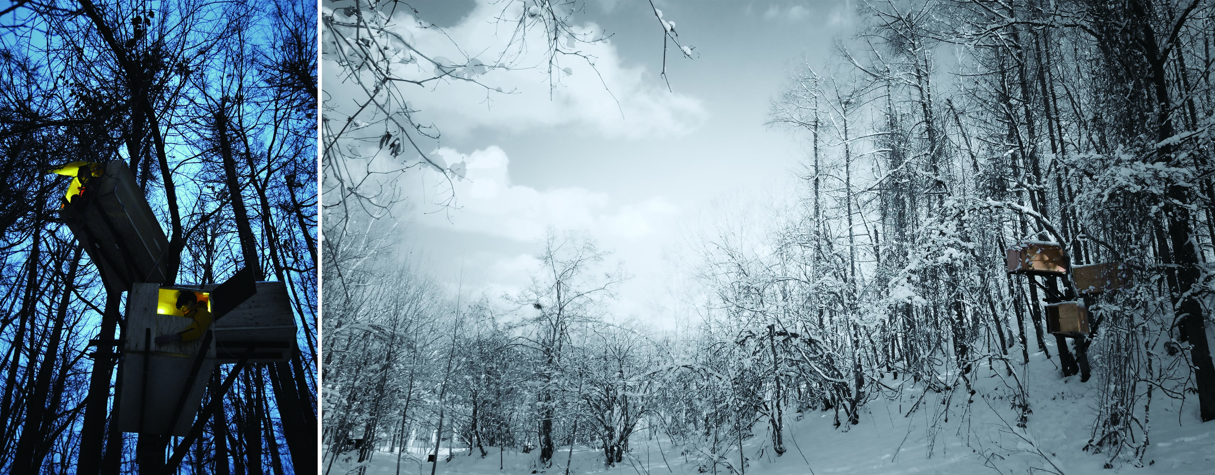写真8:神守優二「Thinning Drive/間伐を待つ樹木と空間デザイン」